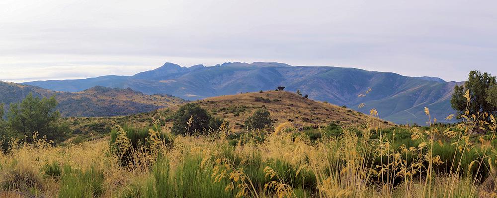 Camino desde Horcajo de la Ribera a La Lastra del Cano